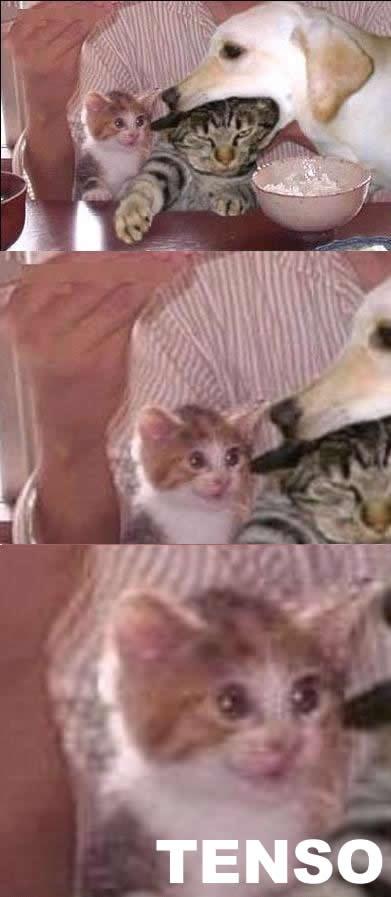 tenso-gato