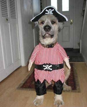 fotos_1245_pirata