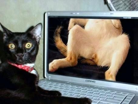 gato-porno
